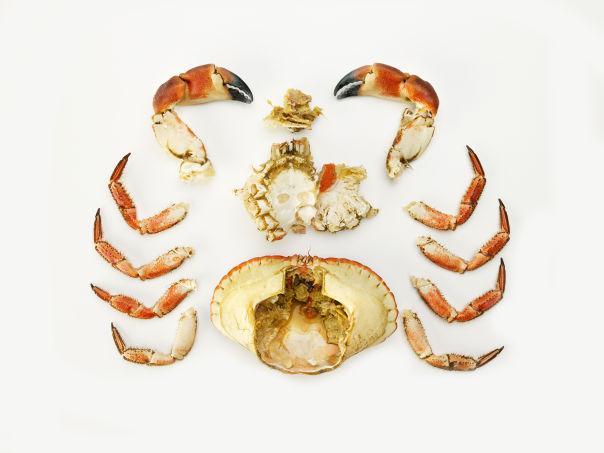 Rensing av krabbe