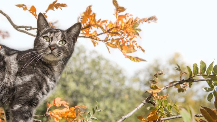 Fauna kvalitetsfôr til både hund og katt.