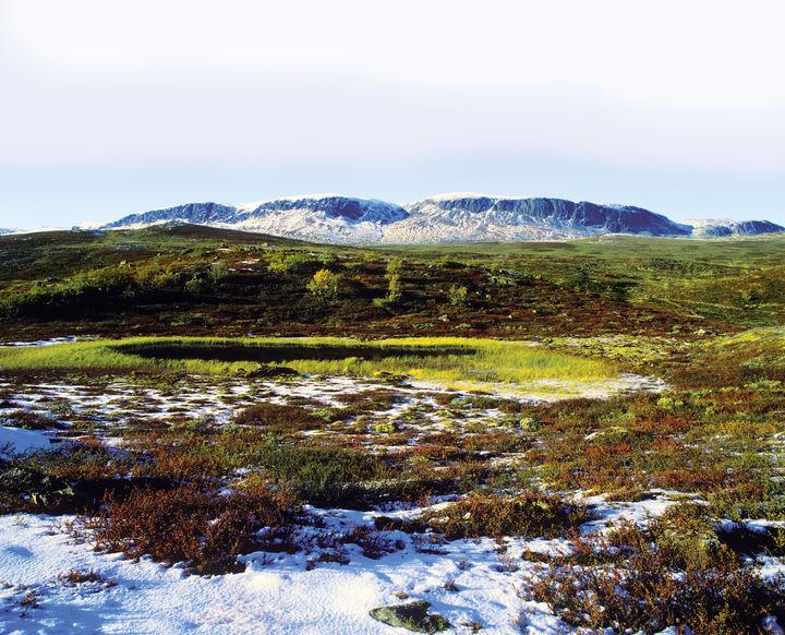 Hallingskarvet er en fjellrygg som strekker seg fra Geilo til nord for Finse. Her går lam fritt på høyfjellsbeite i 1000-1600 meters høyde.