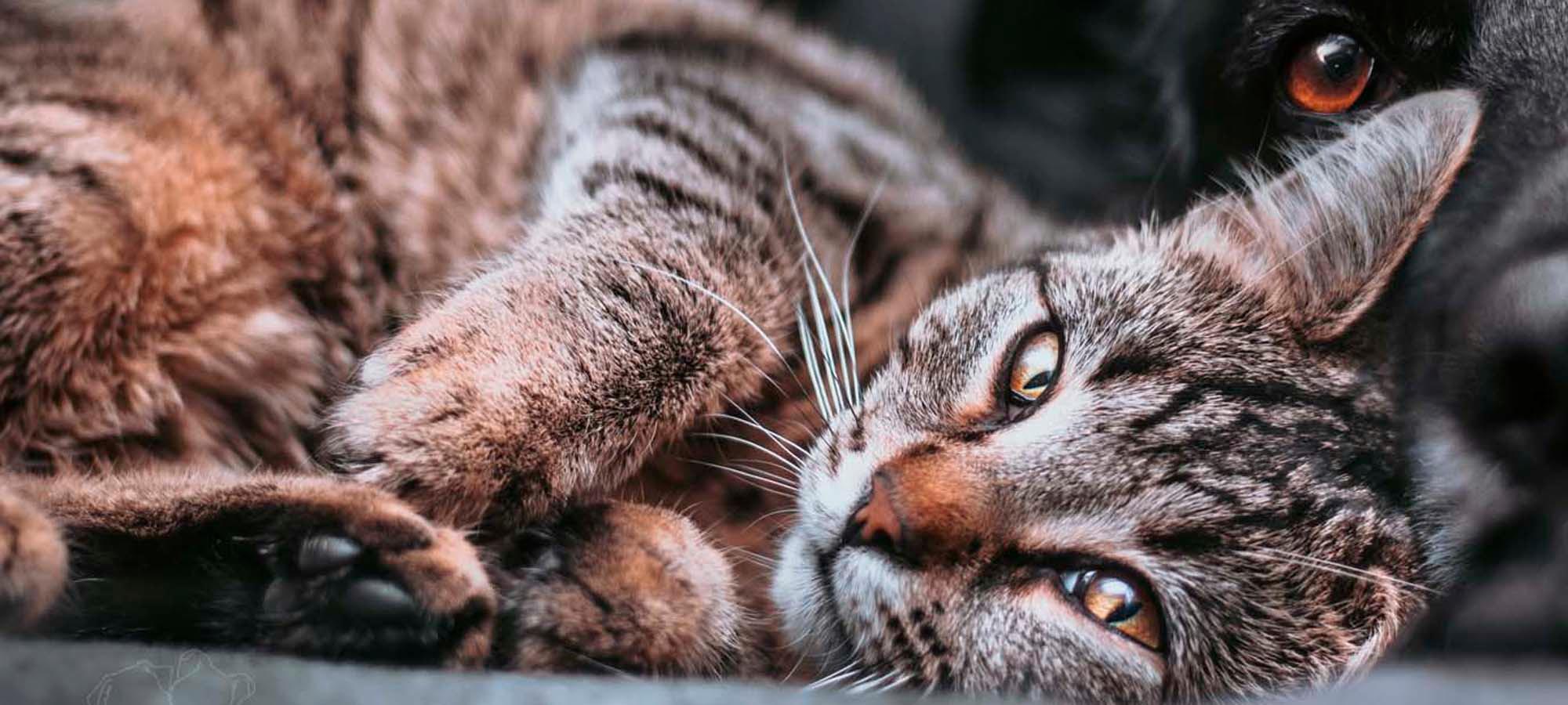 Kastrert katt_artikkel_2000x900.jpg