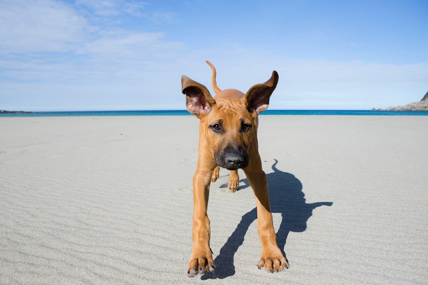 Bunesstranda har flere ganger blitt kåret til Norges fineste strand i ulike kåringer. Henry er enig at dette er en fet strand!