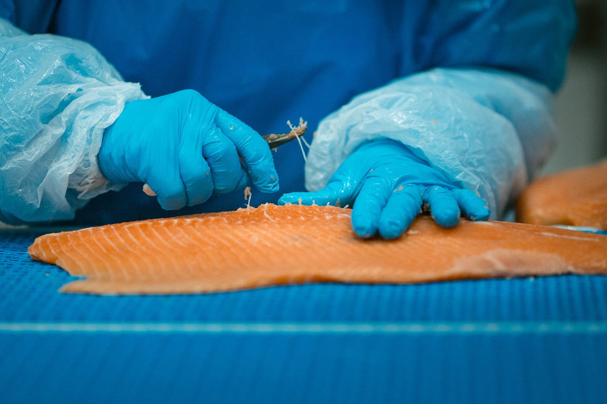 Sjømathuset fileterer og foredler fisken. Foto: Nin Holtan