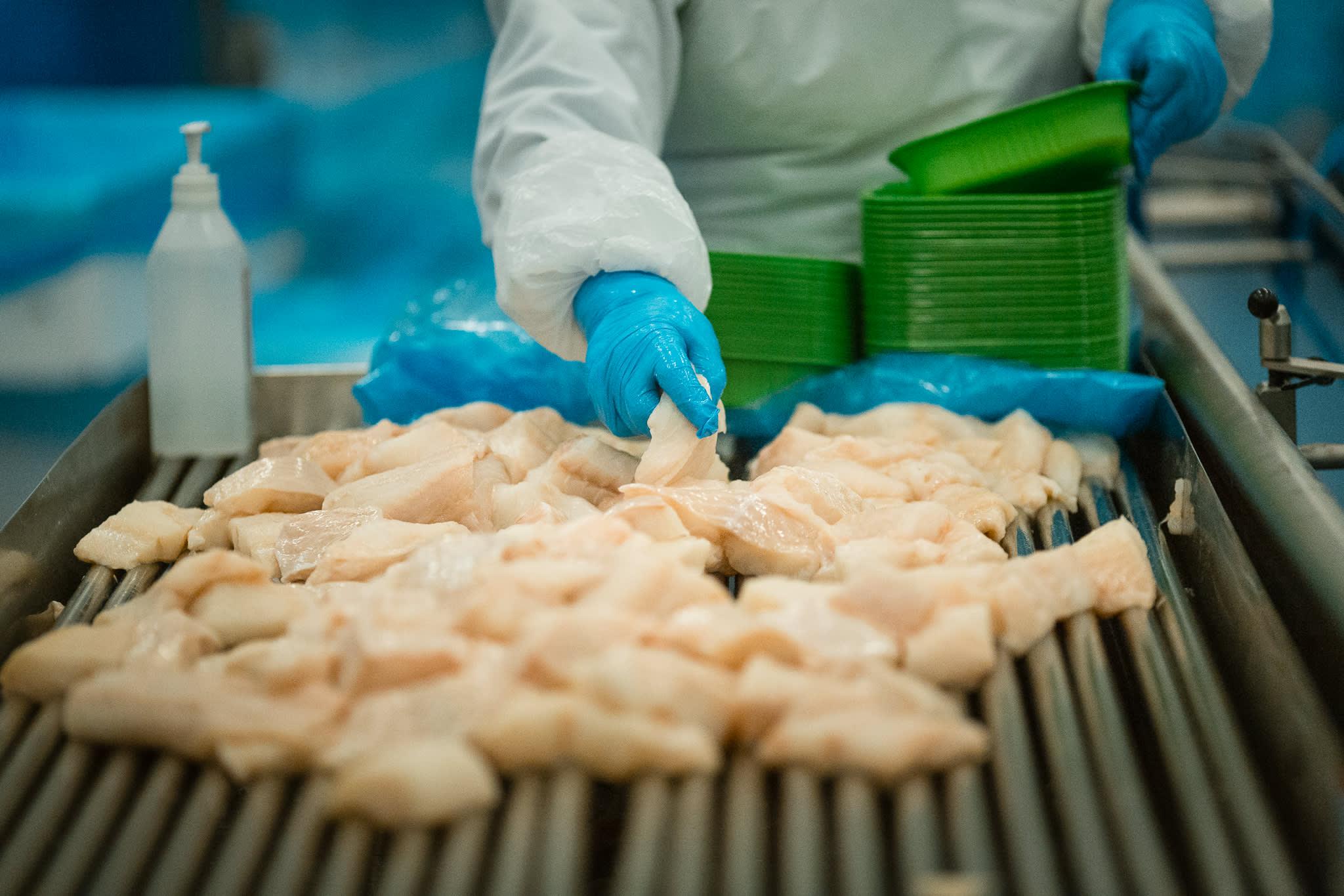 Hvit fisk på vei til KIWI i ferdigpakkede porsjoner.Foto: Nina Holtan