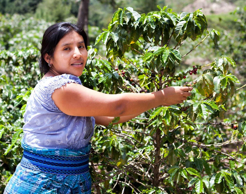 Kaffeplukker Colombia.png