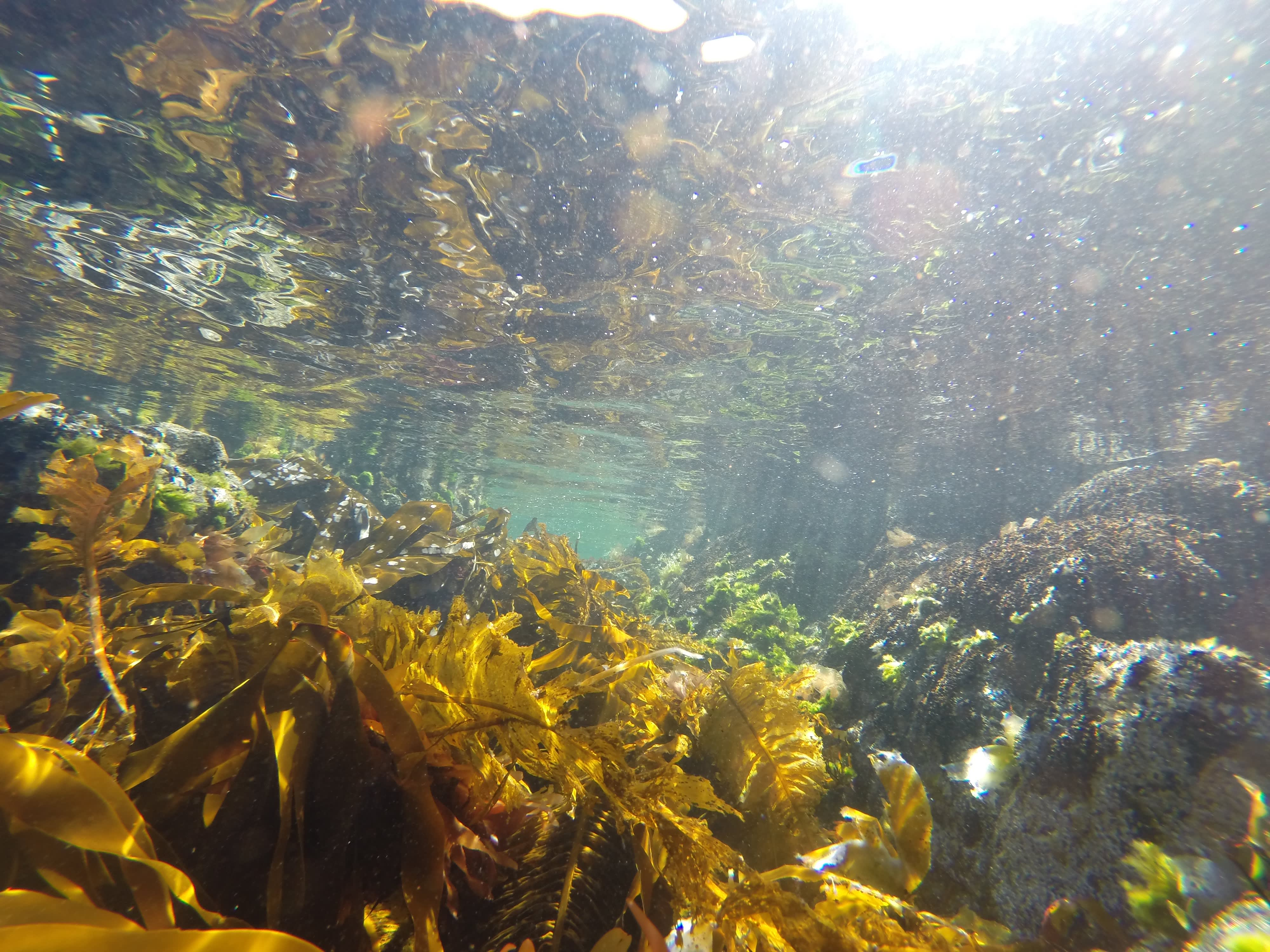 En undervannsjungel. Havet er fullt av vidunderlige smaker og farger.
