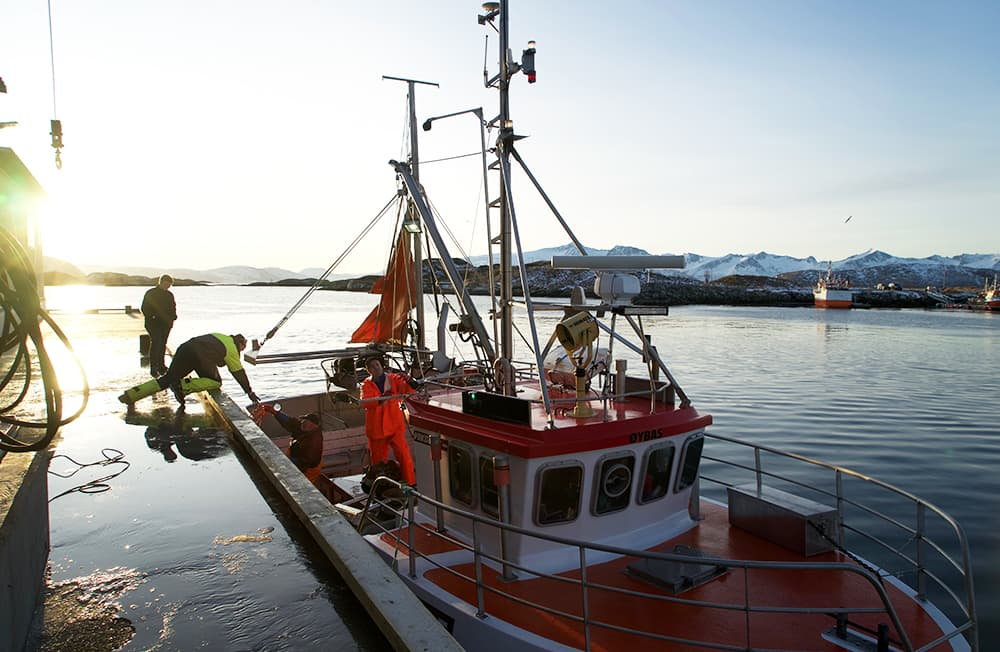 KIWIs reporter dro til sjøs for å finne ut hvor fisken i KIWI-butikken egentlig kommer fra.