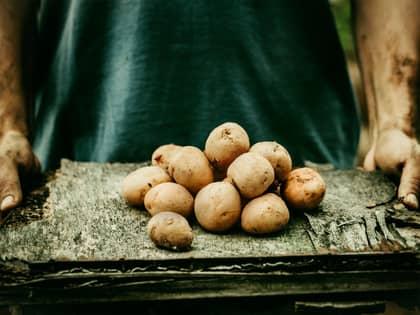 Derfor bør du spise poteter