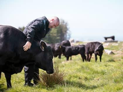 Norsk Angus kjøtt - rødt kjøtt med god samvittighet