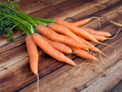 Alt du trenger å vite om gulrøtter