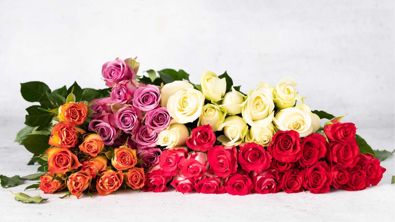 Alle roser 2 for 150kr