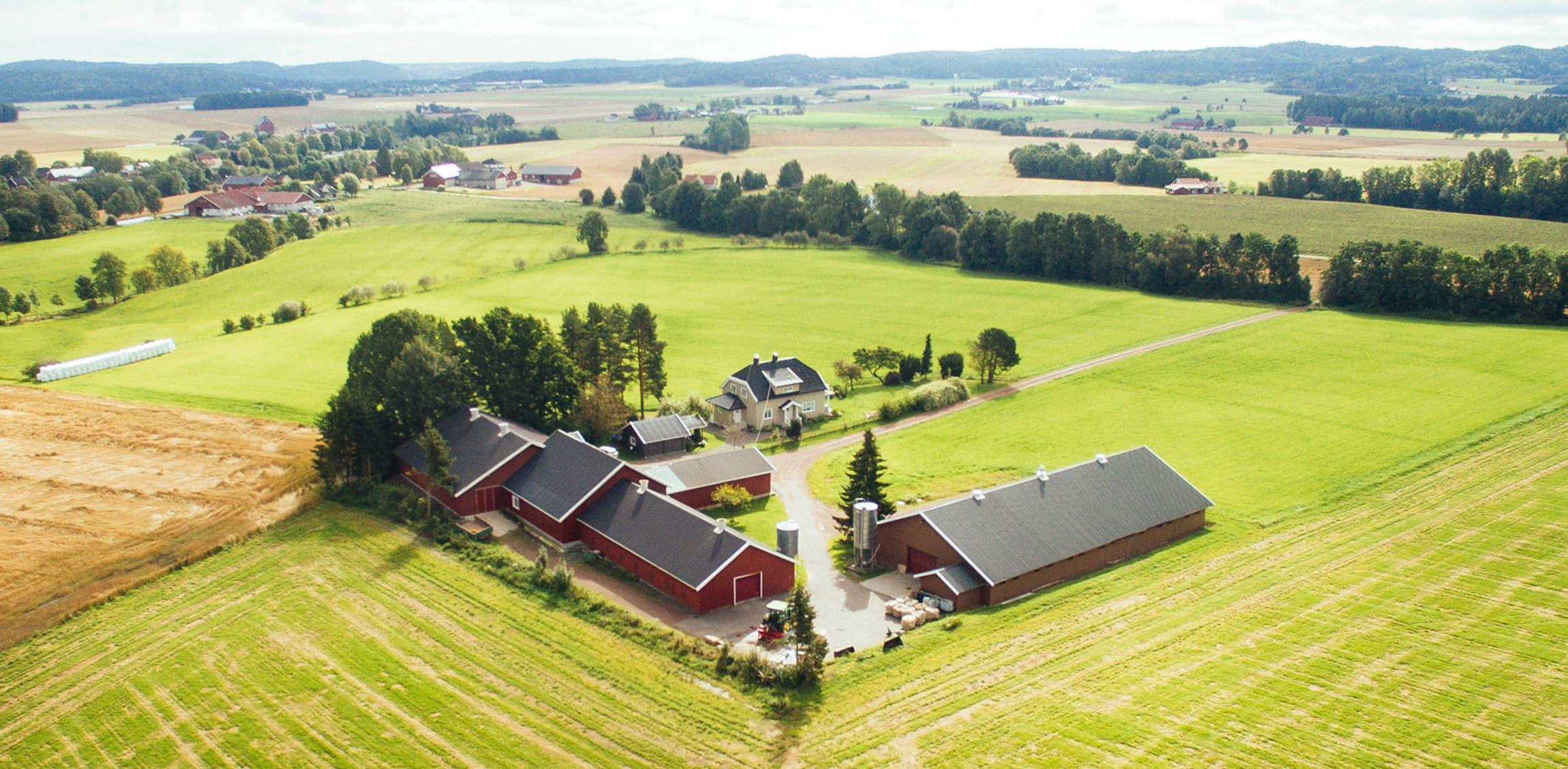 Alle Lerstangkyllinger starter livet på Lerstang gård før de vokser opp hos noen få utvalgte og omsorgsfulle bønder rundt i Vestfold.