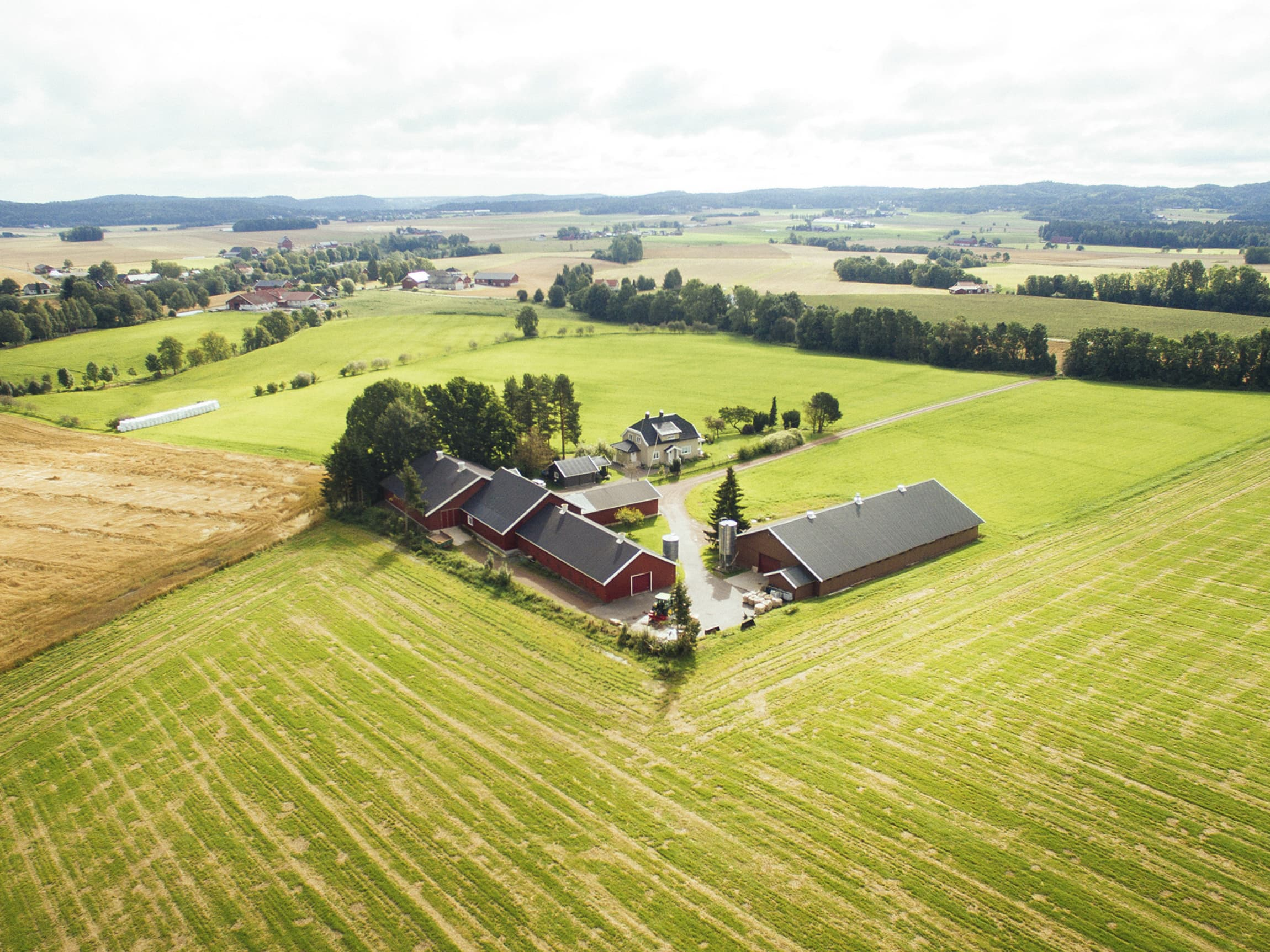 Lerstang Gård samarbeider med flere bønder i nærområdet, blant annet Sigbjørn Rød.