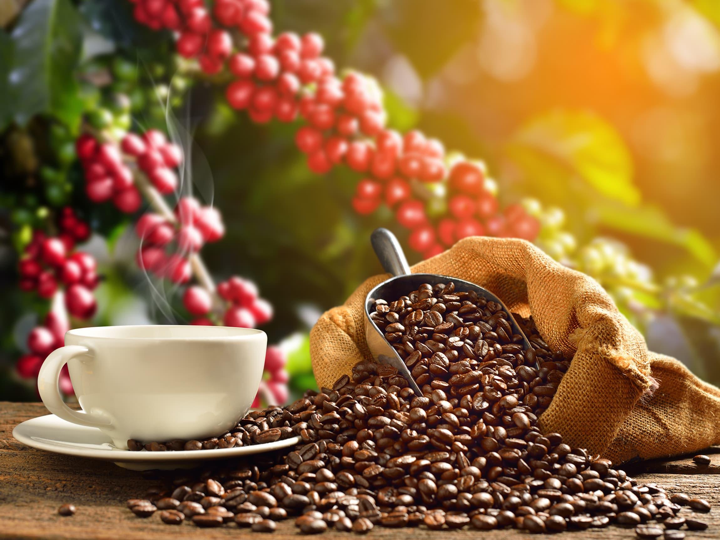 Alt du trenger å vite om kaffe