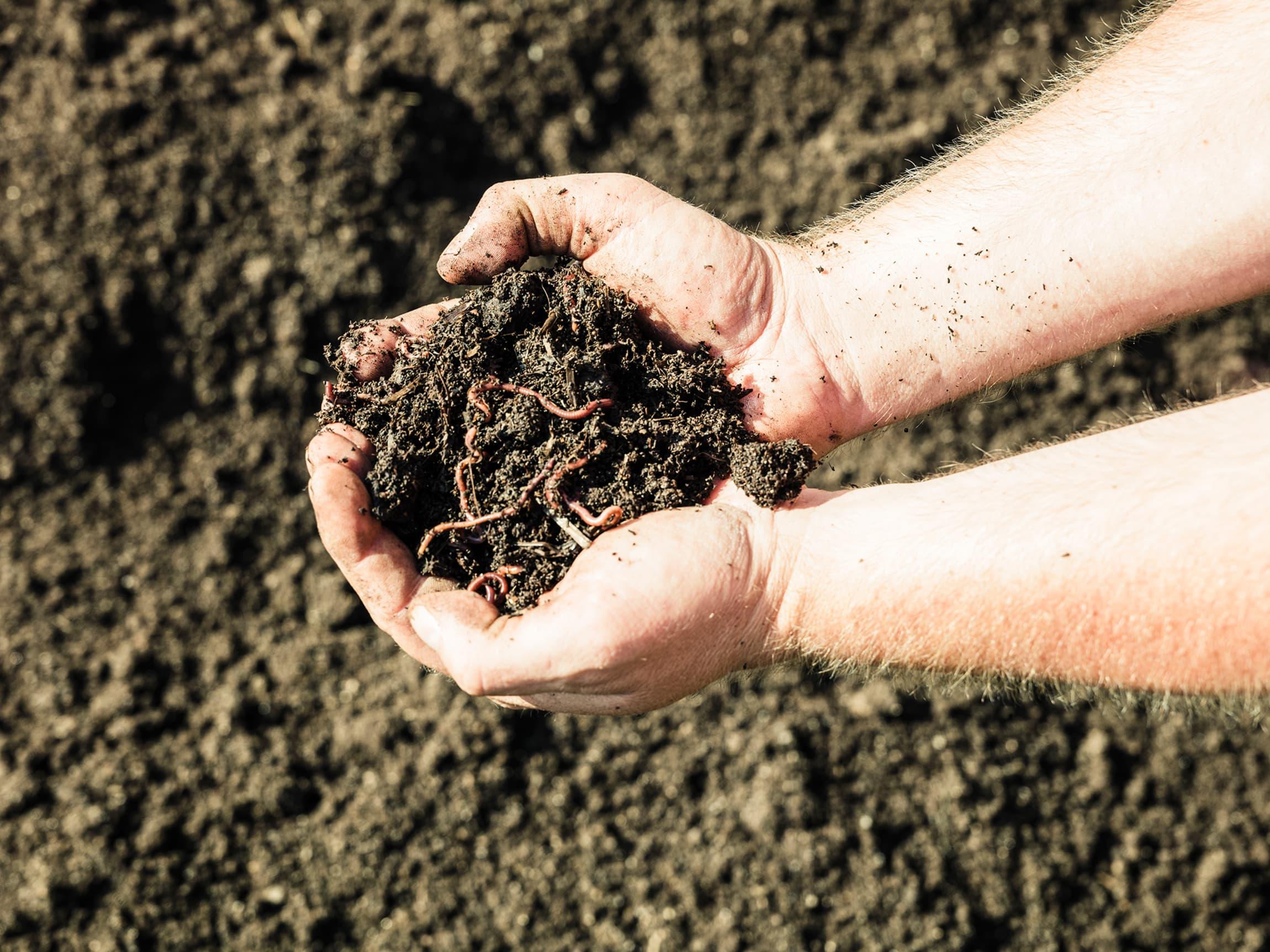 Den næringsrike jorda er full av liv.