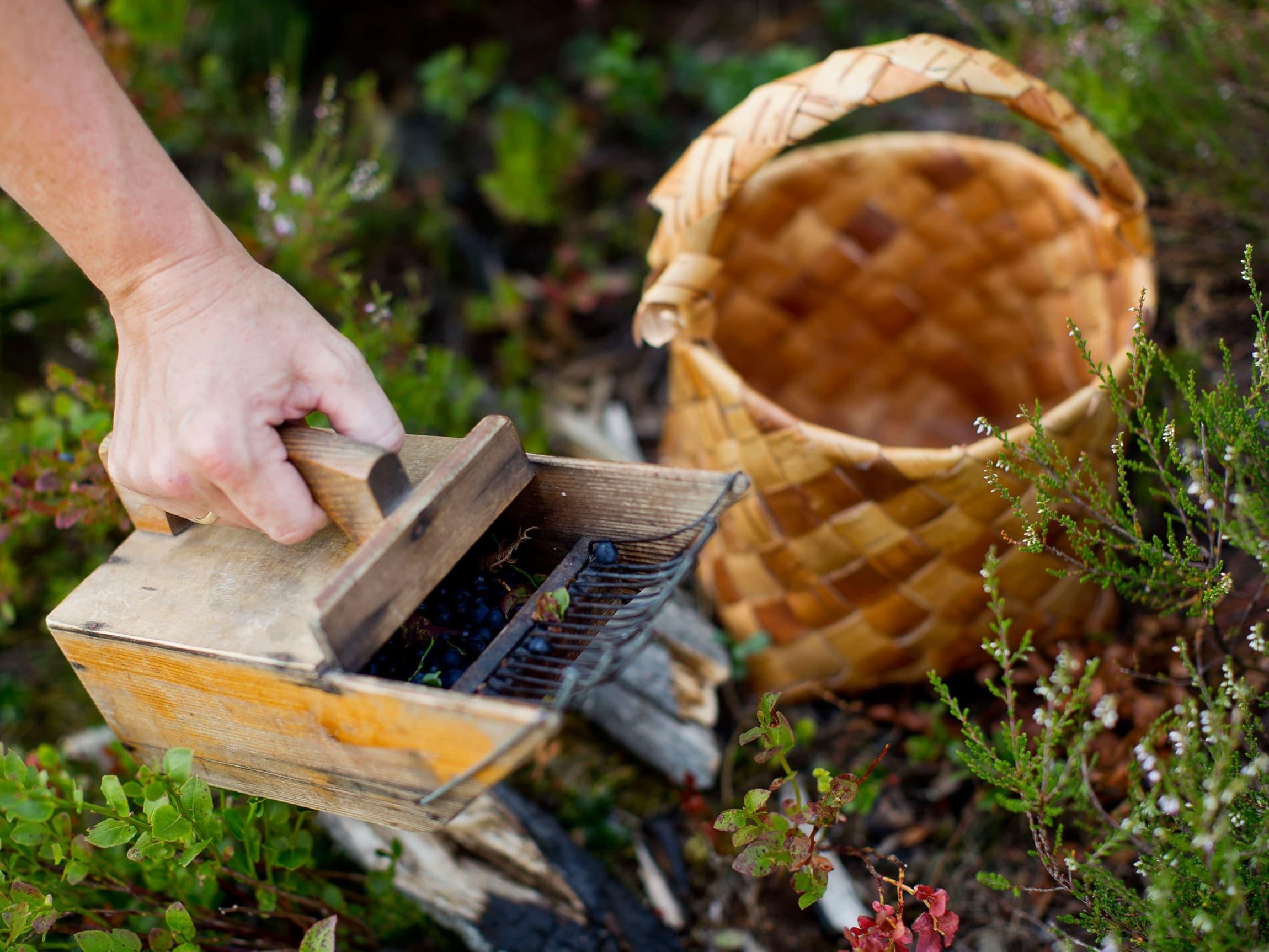 På Røyland Gård lages geleer og syltetøy av håndplukkede, ville bær rundt gården.