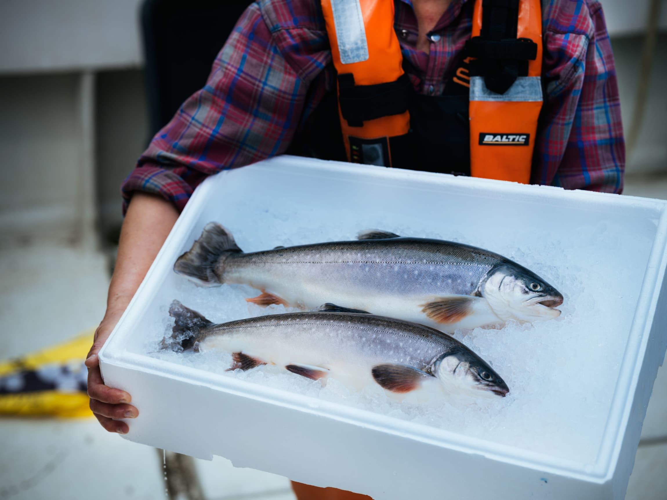 Fersk Telemarkrøye finner du i fiskedisken hos et stort utvalg MENY-butikker