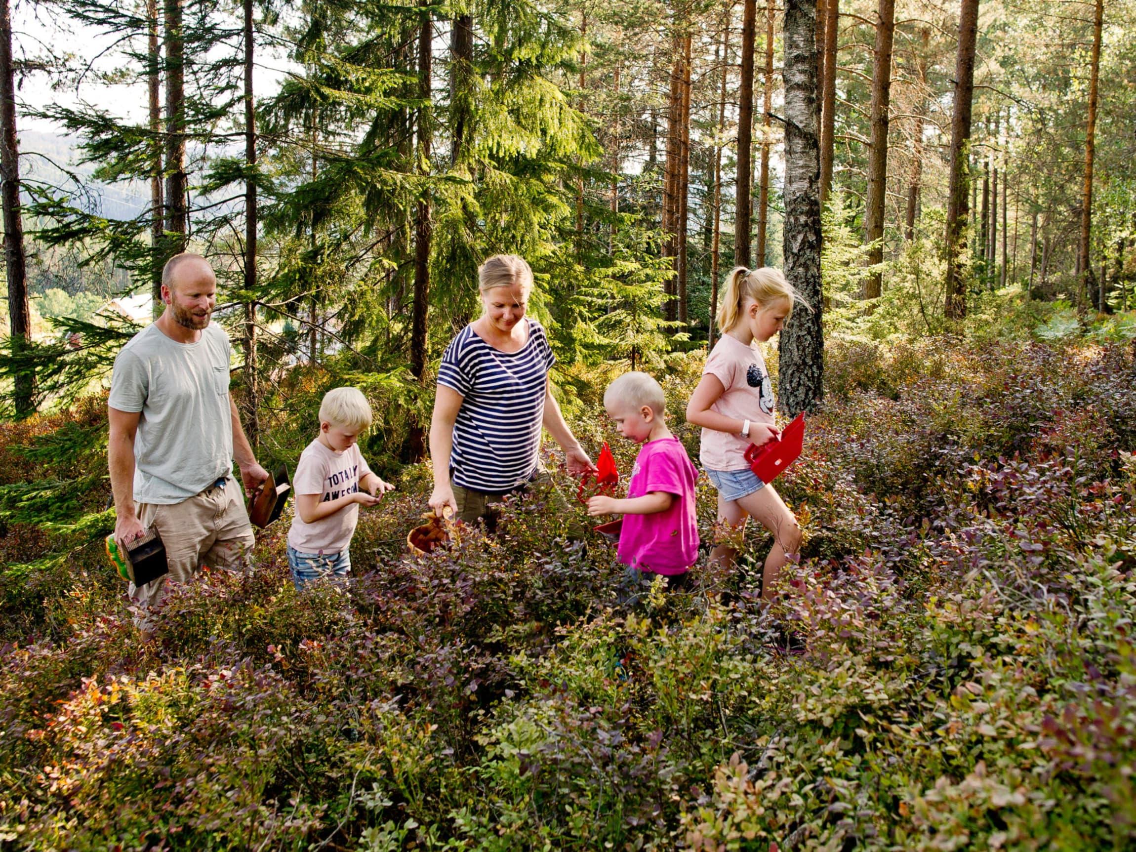 Røyland Gård har hele tiden vært opptatt av utnytting av naturressursene. Høsting, sanking og foredling har vært en naturlig del av hverdagen på gården fra starten av.