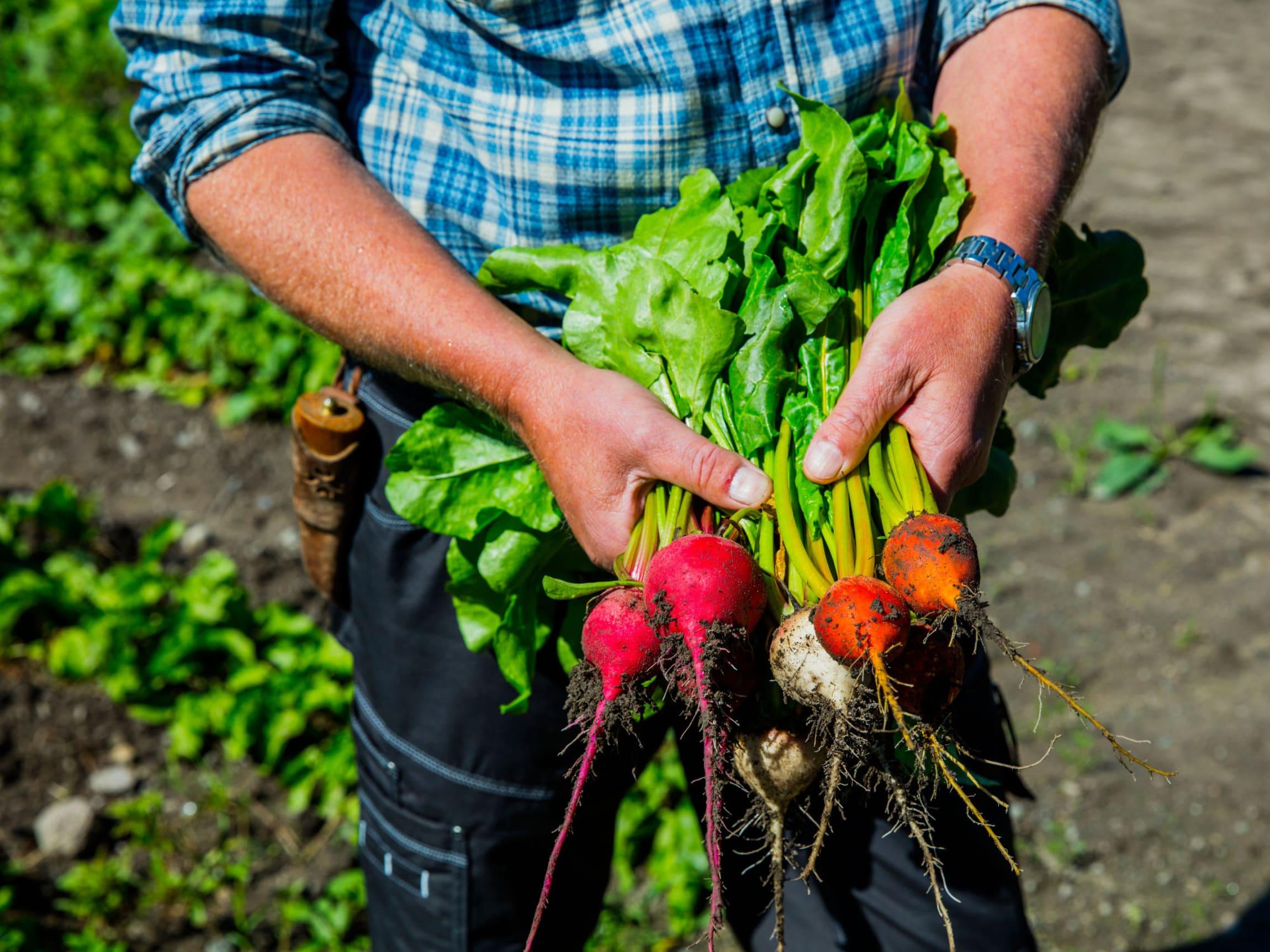Kort vei fra bonden til butikk gjør at du kan nyte ekstra ferske grønnsaker i sesong.