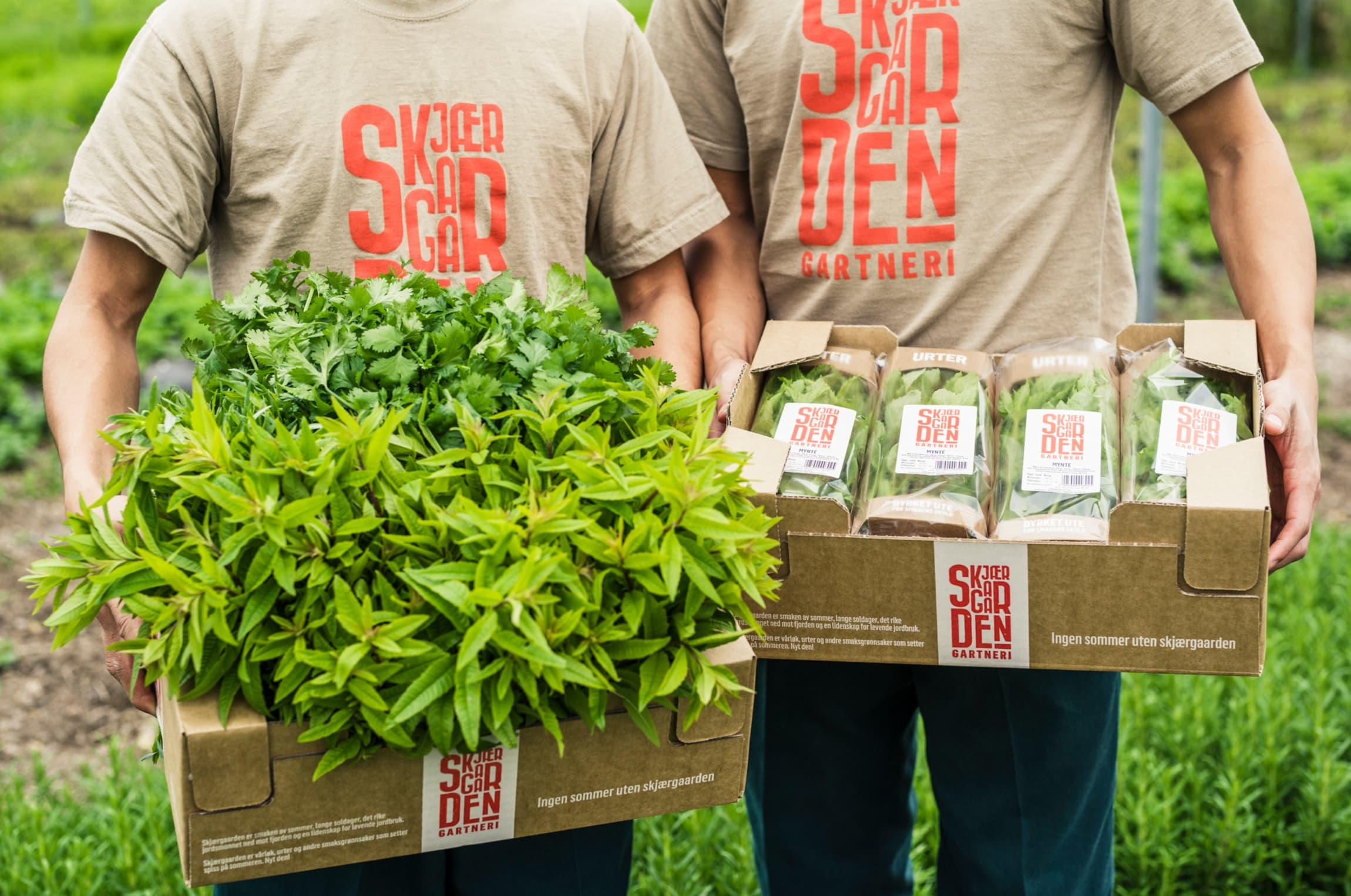 Skjærgaarden gartneri holder til i området rundt Åsgårdstrand, hvor det er et perfekt mikroklima for produksjon av urtene.