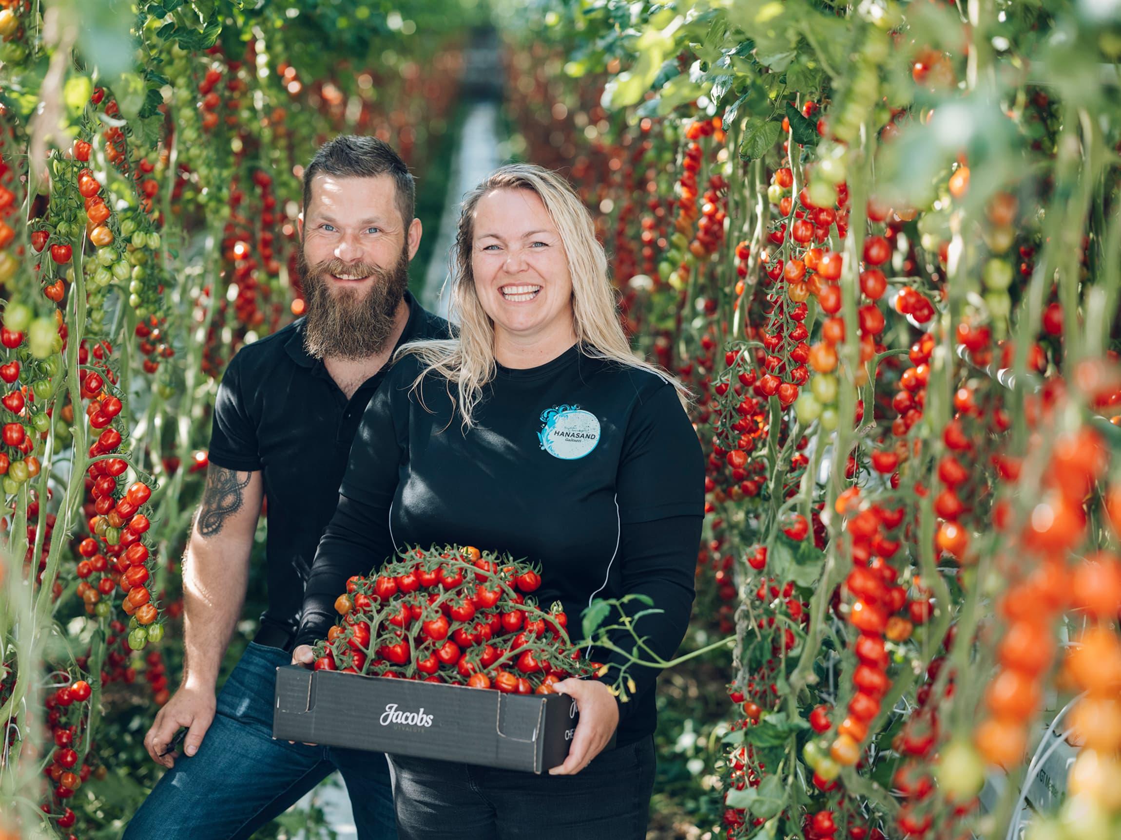 Stig Jacob og Monica leter stadig etter nye tomatfrø og spennende smaker