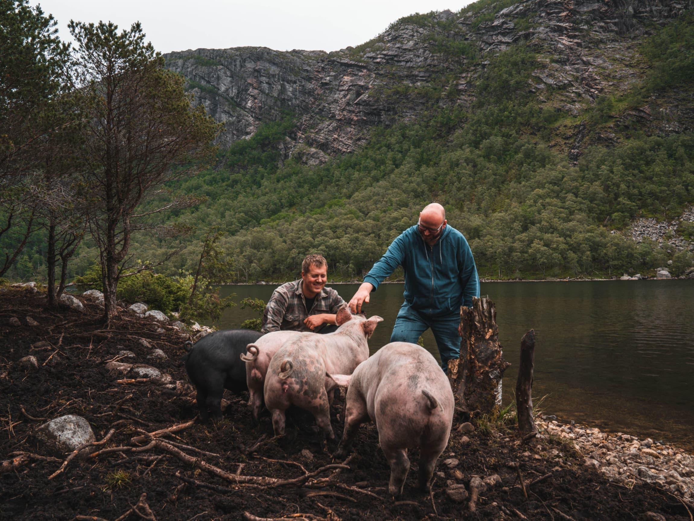 Grisebonde Andreas Handeland og leder av MENY-Lauget Espen Lie hilser på utegrisene på Bjuland gård.
