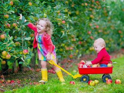Mange epler, mange smaker
