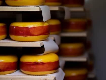 Modningen av ost er viktig for å utvikle smak. Her ligger den verdensberømte Fanaosten til modning.