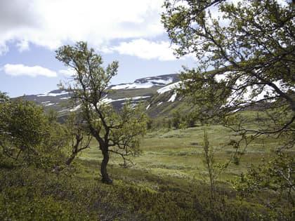 Hallingskarvet lam – førsteklasses fjellmeny