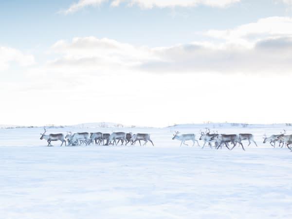 Finnmark Rein