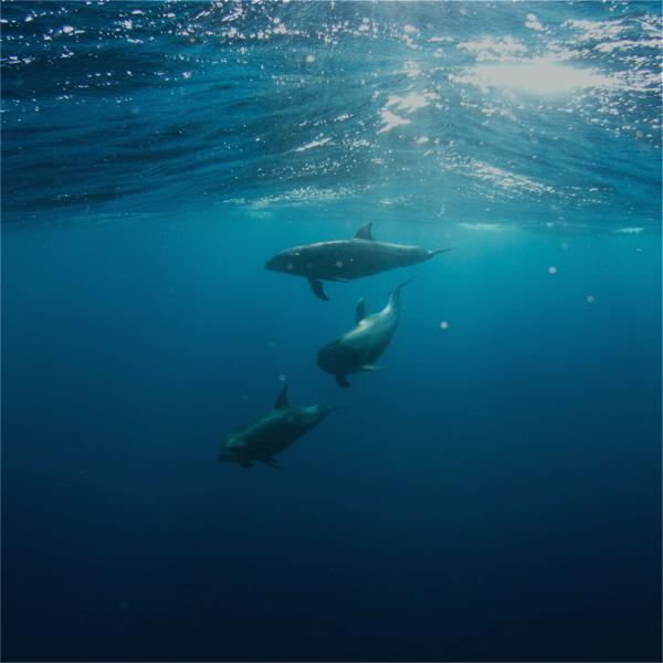 Norm global goals 14 life below water