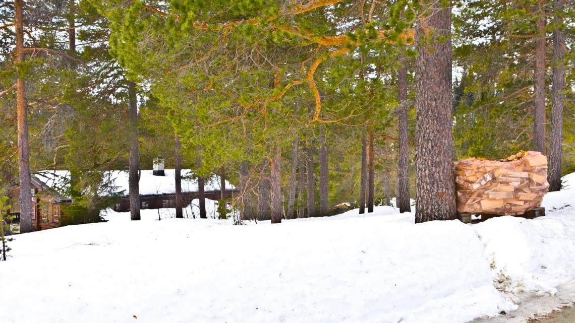 Har du nok bjørkeved til vinterferien!