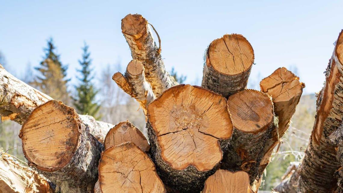 Behov for sikring av tømmervelta?