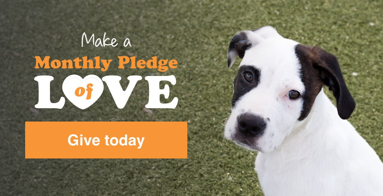 Make a Monthly Pledge of Love Give today