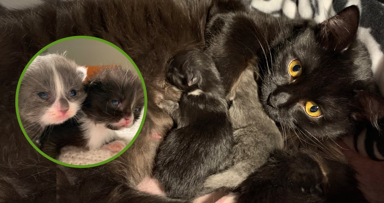 Kona and her kittens