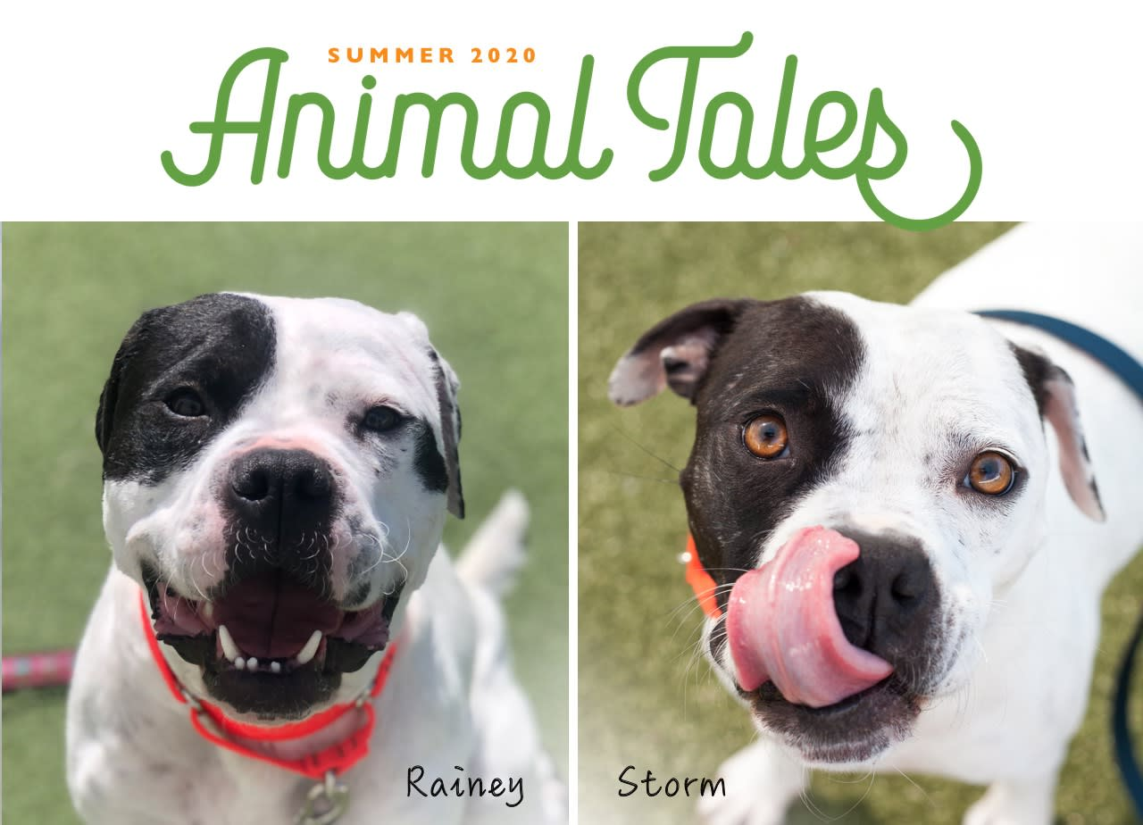 SUMMER 2020 Animal Tales Rainey and Storm