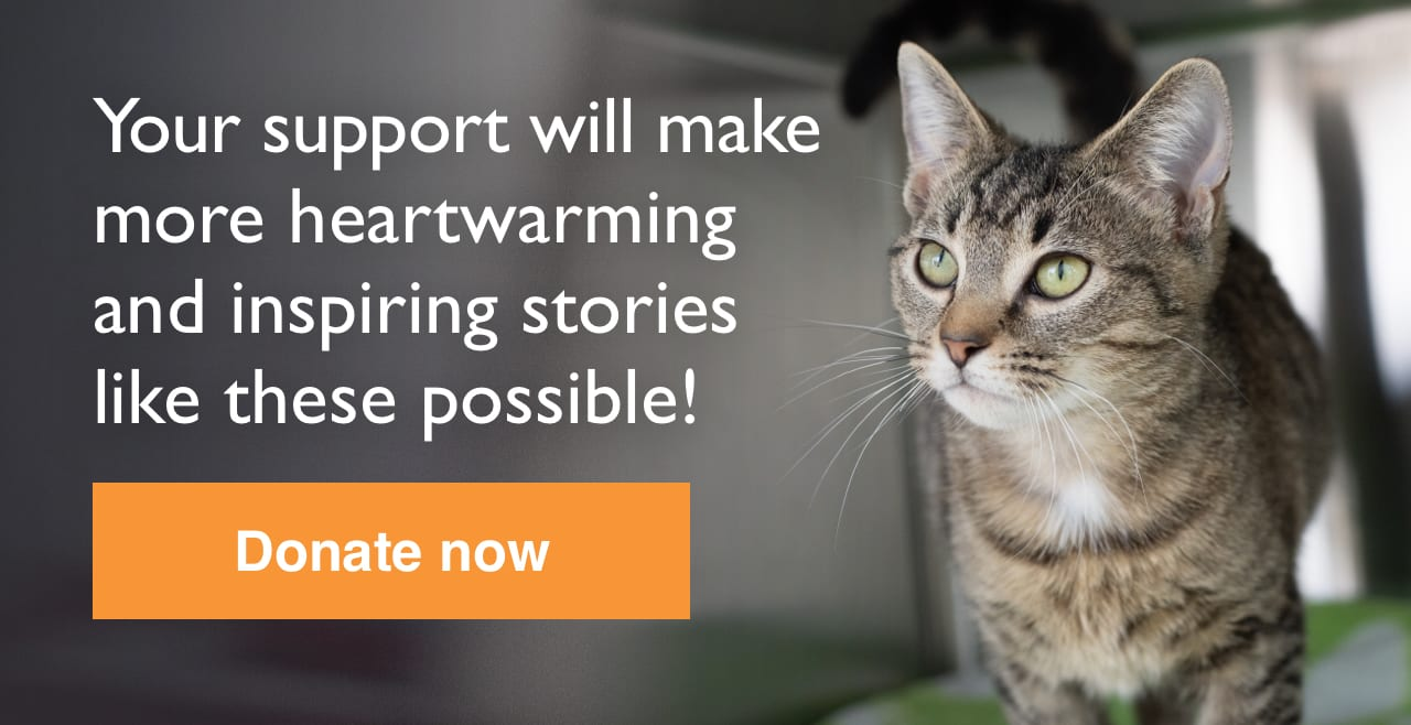 Help homeless pets during this challenging time. Donate now