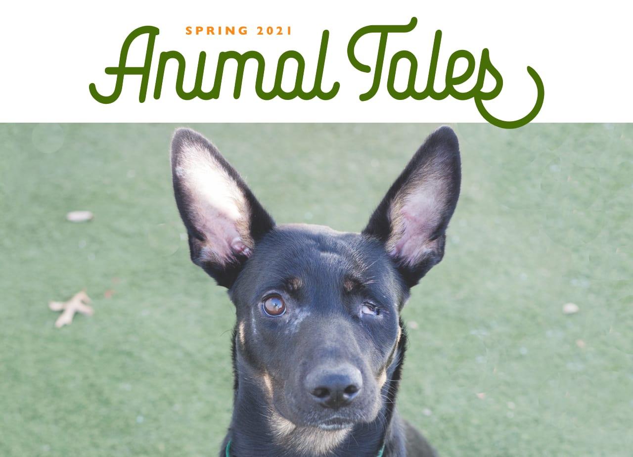 Winter 2021 Animal Tales