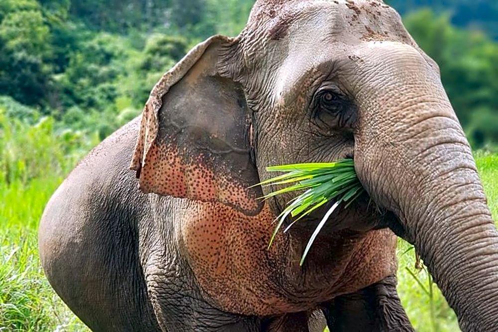 Elephant Sanctuary | Full Day Experience