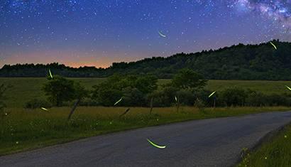 2020 April Feature Fireflies 410