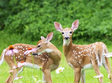 2020 July Law Review Deer Management at National Seashore 410