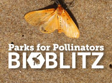 BioBlitz March blog 410