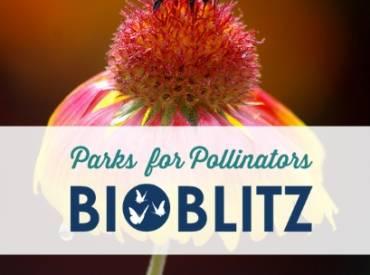 BioBlitz Web 410