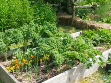Community Garden Tips 410