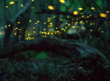 Firefly blog 410
