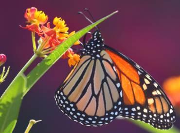 park pulse 2019 pollinators 410