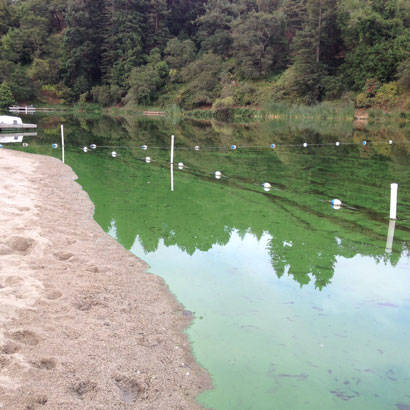 2017 July Operations Blue Green Algae and Recreational Waters 410
