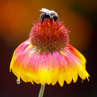2018 July NRPA Update Parks for Pollinators4 410