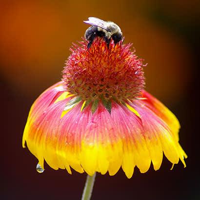2019 February NRPA Update Advance Pollinator Health 410