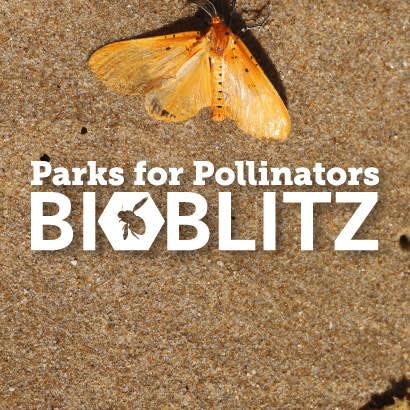 BioBlitz March blog 410