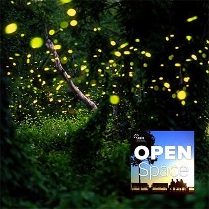 Fireflies April Bonus Episode 410